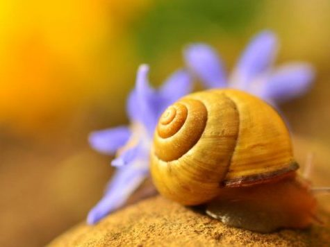 Snail's Pace High Stakes Feud - Poker Tanking